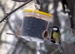 Кормушка для птиц своими руками — реальная помощь бедствующим птицам
