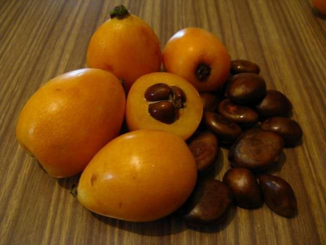 В свежих семенах содержится синильная кислота, ввиду чего они ядовиты. Однако если перемолоть их и пожарить, они могут стать отличным заменителем миндаля