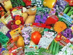 Главные ошибки дачников при выборе семян – реальная проблема для многих