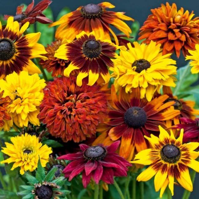 Цветы которые цветут осенью