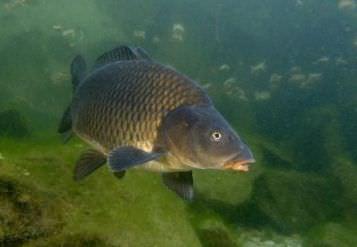 Чтобы обеспечить себе рыбалку в собственном пруду, понадобится водоем подходящих размеров