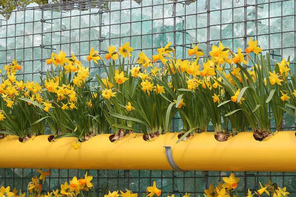 Емкости для выращивания цветов из труб