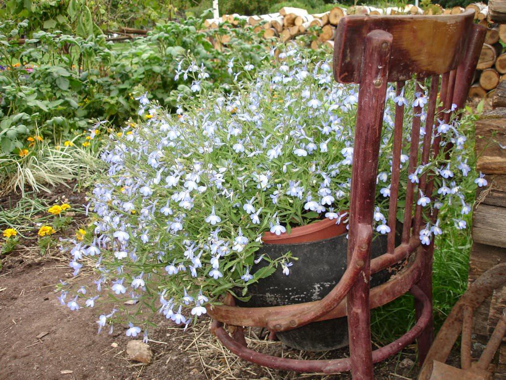 Старая мебель в виде постамента для садовых вазонов