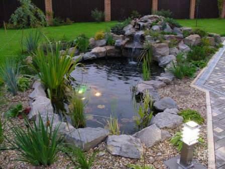 Почему зеленеет вода в пруду и что делать