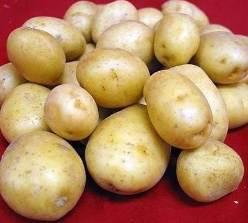 Картофель Великан: описание сорта и отзывы