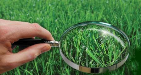 Основное различие видов газона в их стоимости и скорости получения самой зелёной лужайки