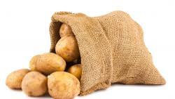 Картофель Венета: посадка и уход