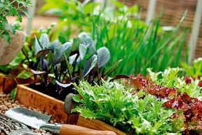 Как поднять грядки на огороде