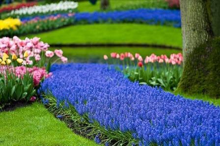 Собираюсь посадить синие цветы какие