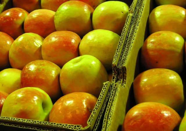 После сбора яблоки лучше рассортировать по размеру и степени поврежденности. Крупные яблоки хранятся несколько хуже
