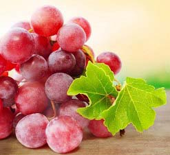 Сорт винограда Лидия: фото и описание