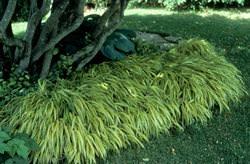 Теневыносливые растения для сада: фото и названия