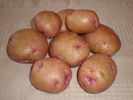 Картофель сорта «Бородянский розовый»: характеристика и особенности агротехники