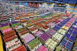Прибыльный цветочный бизнес в тепличных условиях