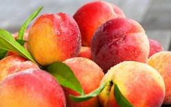 Выращивание персиков в Подмосковье